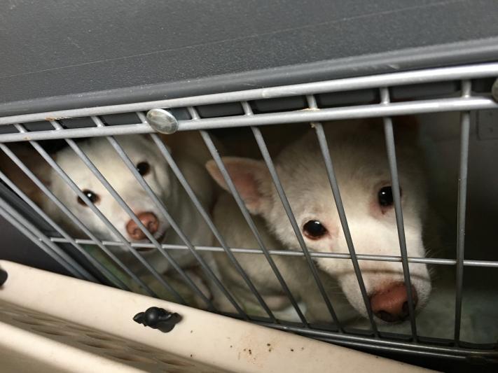 2018-09-21-Hundezucht-Querfurt-c-PETA-D