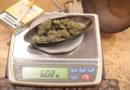 Da lacht die Polizei: Reisender offenbart unabsichtlich Drogenbesitz gegenüber Zöllner