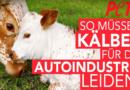 Tierqual für Autoleder
