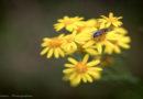 NABU Hessen: Der Insektensommer fängt an