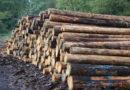 Waldrevier Kirchhof – Diebstahl von 13 Raummeter Industrieholz