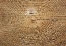 Auswirkungen extremer Wind- und Wetterlagen auf den Wald