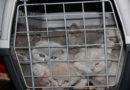 Das Weihnachtsgeschäft boomt: Illegaler Tierhandel: Auch Katzen sind betroffen