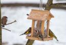 Vögel füttern in Herbst und Winter