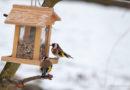 NABU: Milder Winter beschert uns weniger Gäste am Futterhaus