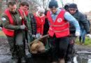 VIER PFOTEN beendet illegale Haltung von Braunbären in Polen
