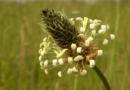 Bei Halsschmerzen helfen Heilpflanzen und Hausmittel