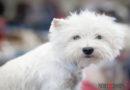 Keine Angst vor Sommergewittern: PETA-Expertin gibt Haltern sensibler Hunde nützliche Tipps
