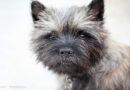 Mit Meerschweinchen, Hund und Katze stressfrei beim Tierarzt: PETA-Expertin gibt Tipps, um den Besuch für Vier- und Zweibeiner entspannt zu gestalten