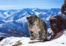 """ZDF und BBC realisieren bildgewaltige Weltreise / Sechsteilige Naturdokumentation """"Terra X: Eine Erde – viele Welten"""" als Koproduktion"""
