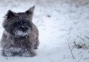 Heimtier-Tipps für die kalten Wintertage