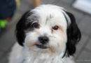 Korbach – Mischlingshund rettet Herrchen durch lautes Bellen