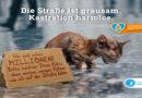 Schlafkisten für Straßenkatzen selber bauen