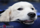 Tag des Hundes am 11. Juni: TASSO macht auf das Leid der Hunde im Labor aufmerksam