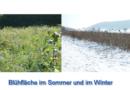 """""""Blühflächen"""" – auch im Winter wertvoll"""