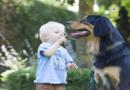"""""""Puh, du hast Mundgeruch!"""" – Zahngesundheit bei Haustieren ist wichtig"""