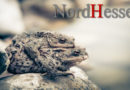 Kröten und Frösche freuen sich über gute Wanderbedingungen