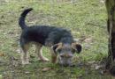 Tier der Woche : Oscar sucht ein liebevolles Zuhause