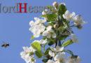 Naturschützer werben für mehr Blühpflanzen für Bienen
