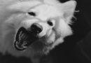 Mit dem Hund spielen könnte gefährlich werden