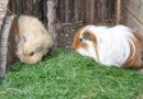 Regelungen zum Schutz der Heimtiere