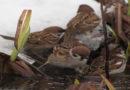 NABU Hessen ruft zur Rücksichtnahme auf Vögel auf