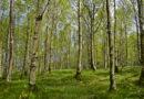 Hessens Wälder weiter stabil trotz Hitze und Dürre