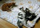 Von wegen gelähmt und tot – Die ungewöhnliche Geschichte von Katze Krümel und Kater Finnley
