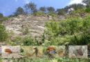 Verborgene Schneckenwelt der Landschnecken