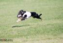 Flug-Hunde oder Fliegende Hunde?