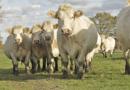 Keine Angst vor Begegnungen mit Kühen & Co.: PETA-Expertin gibt 10 Tipps für gefahrloses Wandern in den Bergen