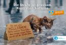 Katzenschutz-Kampagne: Endspurt der Unterschriftensammlung für eine Katzenschutzverordnung