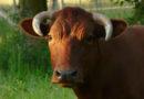 Deutscher Tierschutzbund fordert Stopp von Lebendtiertransporten