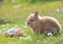 Tipps für ein tierfreundliches Osterfest