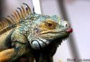 Fressnapf verzichtet auf Wildfänge bei Reptilien