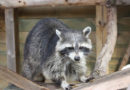 Tierheime werden massiv belastet