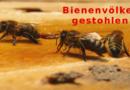 Diebstahl von Bienenvölkern