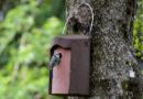 Was'ne Sauerei: Nistkästen mit Vogelnestern zerstört
