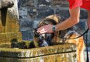 Hitzegefahr für Tiere