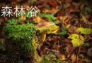 """Bildungsurlaub """"Die Kraft des Waldes"""""""