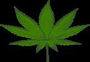 Bad Arolsen/Volkmarsen – Sonderkontrollen der Polizei mit dem Schwerpunkt Alkohol und Drogen: Fünf Autofahrer unter Drogeneinfluss
