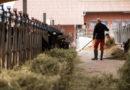 Bundesweit erste Öko-Feldtage auf Domäne Frankenhausen