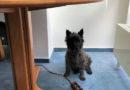 """Aktionstag """"Kollege Hund"""" bringt tierische Kollegen ins Büro"""
