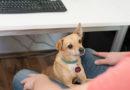 Besser arbeiten mit Bürohund –  TASSO für mehr Hunde am Arbeitsplatz