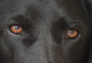 Hunde verletzten 12-Jährige auf Dönche: Frau mit zwei Hunden gesucht