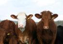 Vernachlässigte Tiere auf der Weide erkennen: PETA-Expertin gibt Tipps
