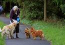 Tiere und Senioren gehören zusammen – Meinungsumfrage von PETA50Plus und BVI50Plus zeigt gesellschaftlichen Handlungsbedarf auf
