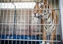 Bundestag stimmt über Wildtierverbot im Zirkus ab