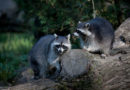 Abstimmung über das Durchführungsgesetz zu invasiven Arten
