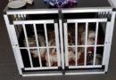 Ehepaar aus Dänemark bei Unfall verletzt; Vier Kleinhunde im Bauhof untergebracht